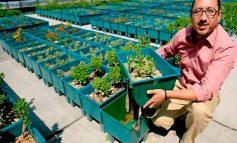 Negocios Verdes como opción de un negocio rentable