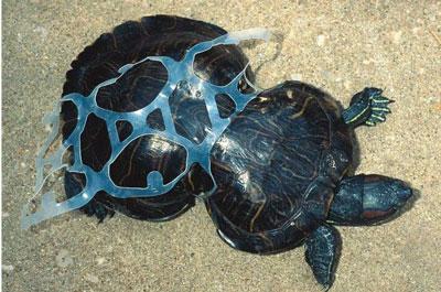 Distribucion de Productos Biodegradables